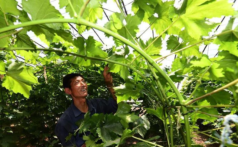 陕西安塞:设施农业促增收