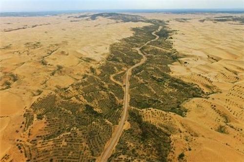 沙漠创造森林高清图片