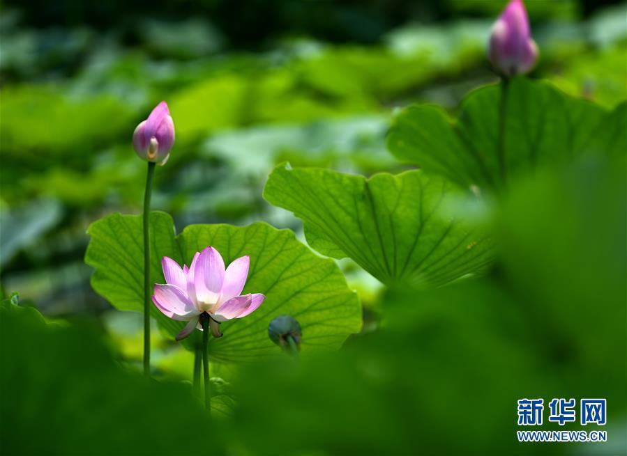 <strong>亚博国际帐号注册:南开大学马蹄湖赏荷</strong>