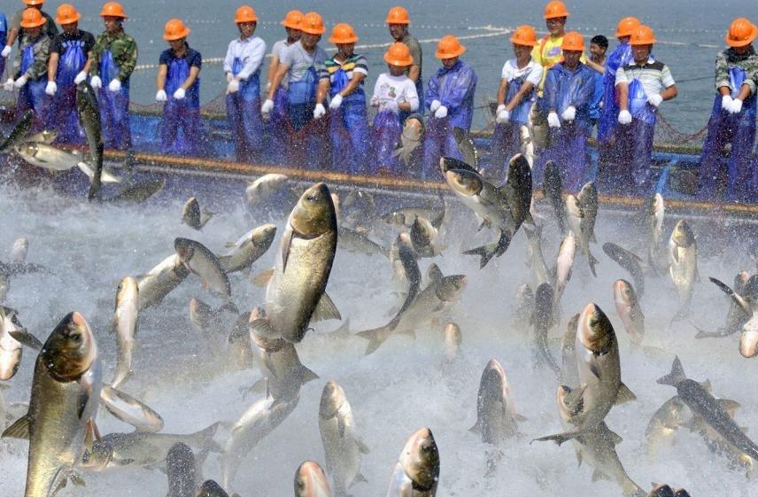 千岛湖捕鱼 场面壮观
