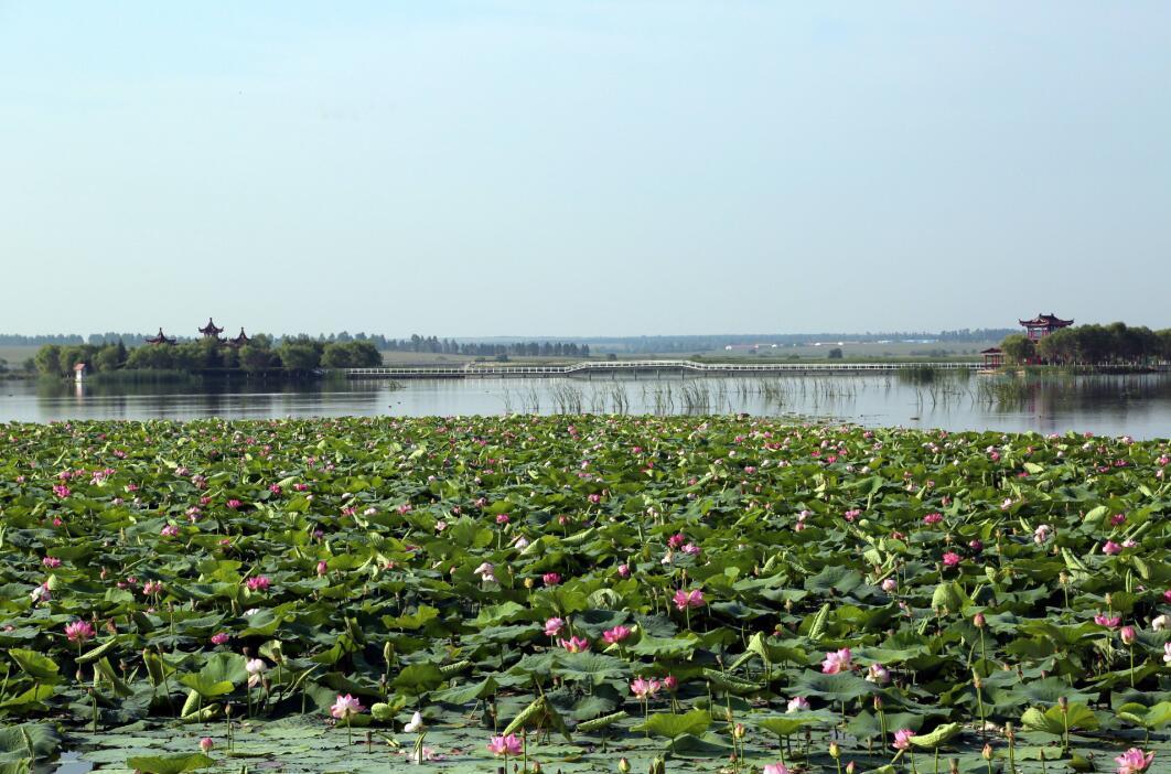 嫩江农场森林公园风景壁纸图片_风景520