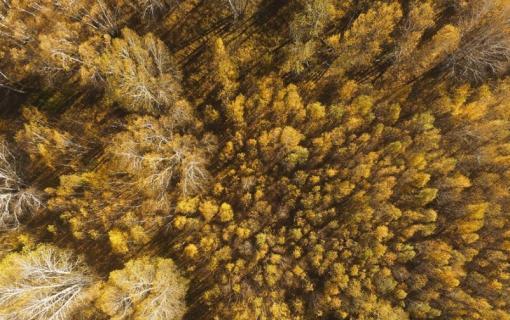 乌兰布统草原秋色 秋意渐浓