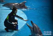 """""""海豚姑娘""""的蓝色之梦"""