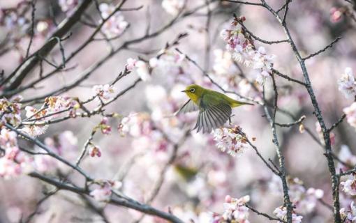 春鸟闹花枝